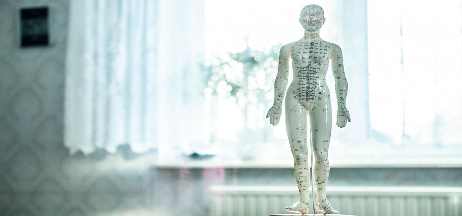 Organer oversigt kroppens Fordøjelsessystemet