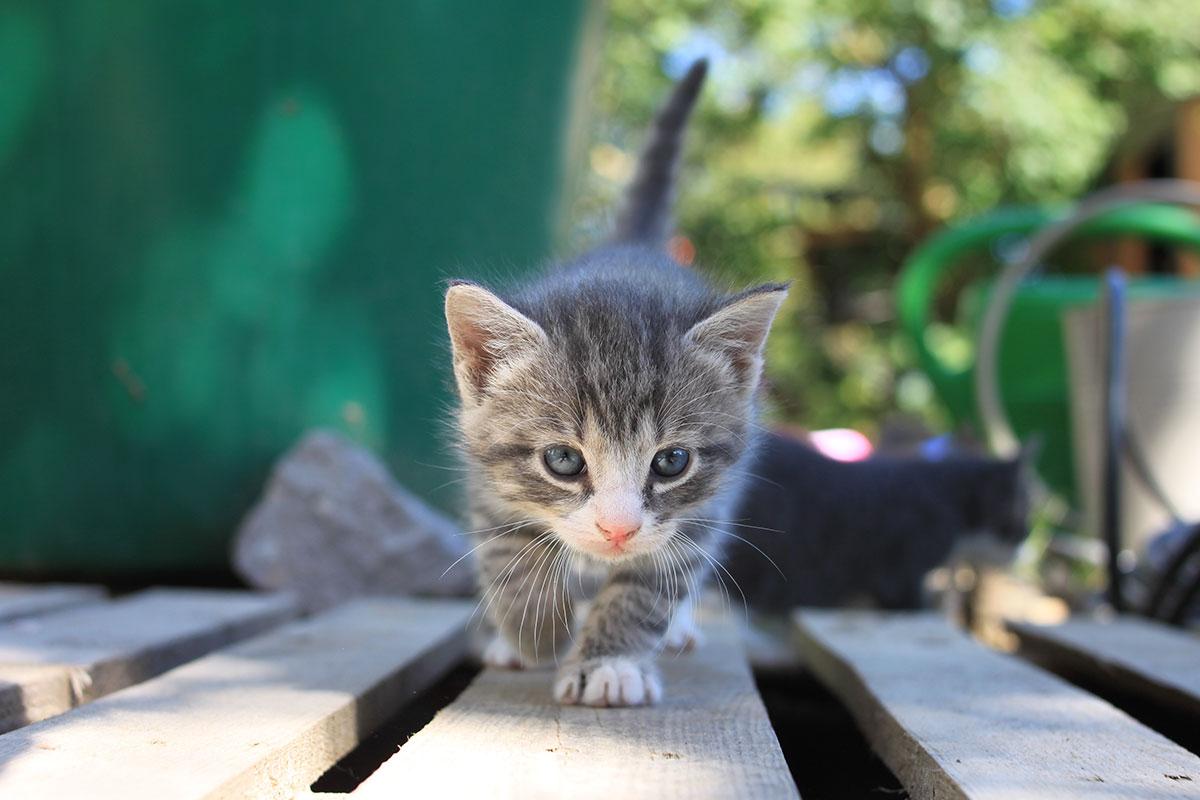 dreams-dyr-kat