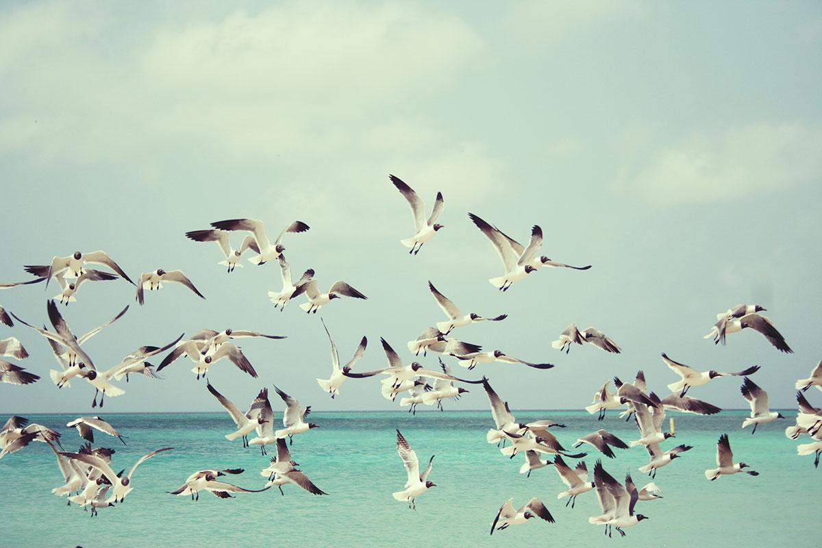 dreams-fugle-1