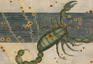 Skorpion Scorpius